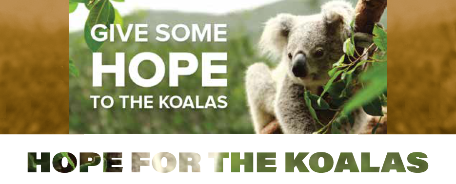 Hope Estate Winery Launches 'Hope for the Koalas' Campaign to Help Australian Koala Foundation